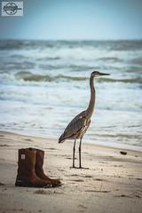 IMG_3751_12-4-16_Orange Beach, AL (Mo-Pump) Tags: gulfofmexico gulfcoast alabamacoast alabama orangebeach al beach boardwalk alabamapoint