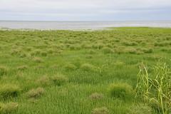 Grassy Beach Grey Sea 5 (Amaury Laporte) Tags: capecod massachusetts northamerica usa unitedstates seashore coast