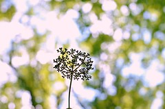 Bokeh (LeanneRichelle) Tags: herrontownwoodsarboretum herrontownwoods arboretum herrontownarboretum herrontown woodsarboretum arboretumwoods woods trail nature view overlook quiet peace peaceful walkingtrail naturetrail outdoor outside trees tree green dirt calm prettywoods prettytrail prettynature newjersey nj jersey njtrail jerseytrail newjerseynaturetrail newjerseywoods njwoods jerseywoods njnature jerseynature newjerseynature bokeh weedbokeh weedsbokeh bokehweeds bokehweed greenbokeh treebokeh leafbokeh bokehleaves cuteweed weedsilhouette