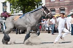 DSC_2682 (Ton van der Weerden) Tags: horses horse dutch de cheval belgian nederlands belges draft chevaux belgisch trait ijzendijke trekpaard trekpaarden tombavandekannelust