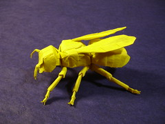 Yellow Jacket - Lang (shuki.kato) Tags: robert yellow paper insect origami wasp bugs bee jacket fold masters lang