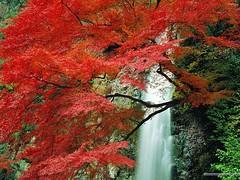 آبشار زيبا (armanazad111) Tags: پاييز البوم ١