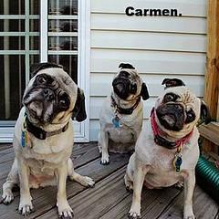 QUE PENSARAN?. (Carmen Cordero Olivares.) Tags: perros collar