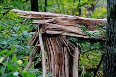 Herfstbeeld na de storm - After the October storm (hrunge) Tags: autumn storm tree netherlands afterthestorm herfst boom ijsbaan blaricum canoneos50d herfstautumn october2013 lensef100mmf28lmacroisusm hrunge herfstbeeldnadestorm