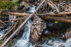 Fern Falls III (Philip Esterle) Tags: mountains landscapes colorado waterfalls streams rmnp forests rockymountainnationalpark philipesterle