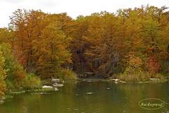 Cypress Trees (backup1940) Tags: trees fall texas dam fallcolors sony cypress cypresstrees guadaluperiver