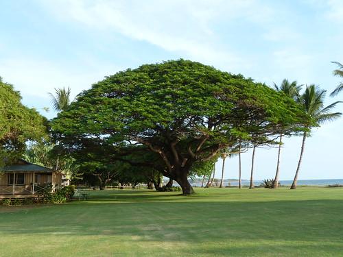 20131118_Kauai_WaimeaPlantationCottages_Cutler_P1600444