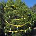 Trees_of_Loop_360_2013_111