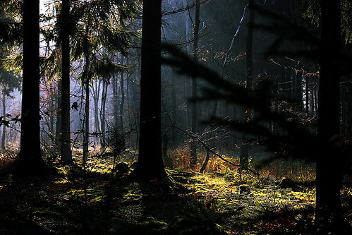 Deep in the woods by Isengardt, on Flickr