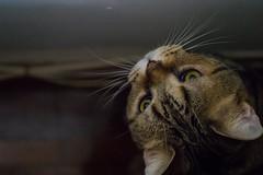 Looking up (tinyau) Tags: cat hongkong sony 45mm g45 a7r contaxg45 sonya7r