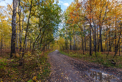 IMG_2478CFSm2048x1379A (Vadim_PP2013 (>330000 views)) Tags: road autumn trees sky reflection fall clouds forest landscape siberia sigma1224mm powerofart canon5dmarkii inspiringcreativeminds