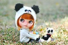 It's Panda Play Day!  *Lottie**