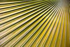 Palm, L. A. County Arboretum (BDFri2012) Tags: california garden arboretum palm southerncalifornia botanicalgarden losangelescounty thearboretum losangelescountyarboretumbotanicgarden