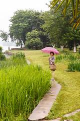 Wuhan 2013-199 (Sean Maynard) Tags: china lake water canon botanical path shore wuhan botanicalgarden hubei pathway eastlake 6d wuchang donghu canon6d chineseacademyofsciences lightroom5 wuhanbotanicalgardens