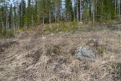 Vipera berus habitat. (joeljir_) Tags: viper adder kyy viperaberus huggorm kreuzotter