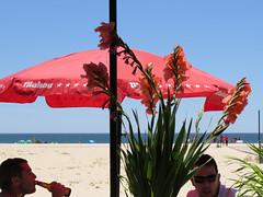 praia da lota (*L) Tags: praia algarve mantarota guardasol sotavento gladolos aiquericasfelorzinhas praiadalota