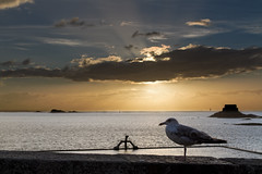 Gull in Saint Malo (Michel Couprie) Tags: sunset sea mer seascape france bird silhouette backlight clouds canon eos brittany fort gull horizon bretagne swimmingpool 7d michel nuages oiseau contrejour saintmalo mouette coucherdesoleil piscine vauban plongeoir couprie petitb ef35f14l