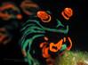Nembrotha kubaryana (Randi Ang) Tags: macro canon indonesia photography underwater north dive scuba diving nudibranch ang sulawesi manado randi seaslug s110 nudi poweshot nembrotha kubaryana