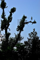 Climbing Fear (Fobonic365) Tags: tree nature dark nowhere eerie creepy unknown ladder