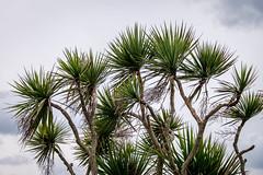 Spiky (Ruth Flickr) Tags: batz brittany enezvaz finistère france roscoff spring coast sea îledebatz bretagne fr