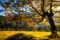 Yellow (KPictures Fotografie) Tags: austria sterreich ahornboden tree landscape nature europe travel hiking sonyrx100m3 mountain outdoor