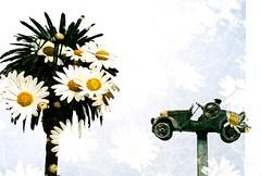 Double exposure (m.sukhanenko) Tags: doubleexposure multipleexposure coquimbo chile paltree flowers daisies retro retrocar statue sky olympus olympusom2sp om2sp zuiko 30mmfilm 50mmlens analogue film oldcamera