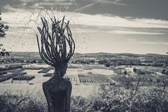 Medusa (clearfotografie) Tags: nikon afsnikkor50mm118g d600 dresden deutschland bw schwarzweis sachsen 50mmf14