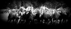 Vuelta, vuelta! (Eduardo Amorim) Tags: cavalos caballos horses chevaux cavalli pferde caballo horse cheval cavallo pferd cavalo cavall tropilla tropilha herd tropillas tropilhas     crioulo criollo crioulos criollos cavalocrioulo cavaloscrioulos caballocriollo caballoscriollos ayacucho provinciadebuenosaires buenosairesprovince argentina sudamrica sdamerika suramrica amricadosul southamerica amriquedusud americameridionale amricadelsur americadelsud eduardoamorim gaucho gauchos gacho gachos