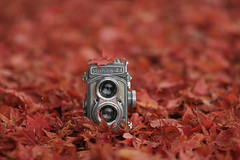 (esmeecadoni) Tags: woods europe netherlands beautifulearth leaves red trees tree sony sunlight outdoor autumn simple simplicity minimal light minimalistic littlethings holland bokeh photography fall forest camera nature morning