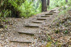 Staircase in the woods (Ivanov Andrey) Tags: forest staircase step board trail path road flower tree deciduoustree hill slope ascent descent bush grass beauty peace relaxation relax nature sun shadow summer travel walking trekking cyprus