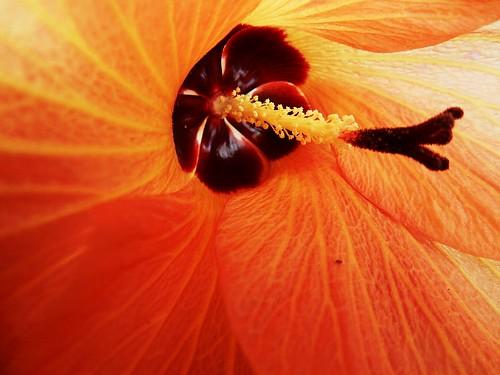 Flower - French Polynesia