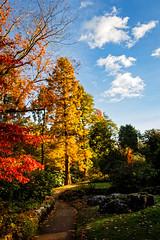 Winterbourne Gardens (stevehimages) Tags: autumn colours steve steveh stevehimages wowzers warden west midlands 2016 winterbourne house gardens