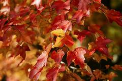 _DSC2493 (BrettGV) Tags: autumn sonnart18135