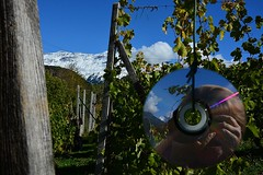 1610_Vigna_0427 (Large) (vb.2015y) Tags: allaperto nikon montagna cielo vigna vite vineyard chiomonte piemonte italia italy uva cd riflesso neve nuvole foglie verde mountain valdisusa donna