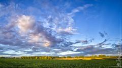 lever de soleil sur la campagne (HDR) (jeje62) Tags: campagne landscape leverdesoleil paysage sunrise lillers nordpasdecalaispicardie france fr hdr dri panoramique panorama