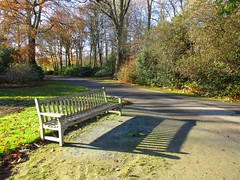 Bench shadows (JulieK (finally moved to Wexford)) Tags: hbm bench shadows jfkarboretum wexford path trees camhino autumn canonixus170 woodland nature colour