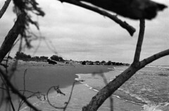 (bettsdg) Tags: bw blackandwhite blackwhite 35mm olympus om10 400asa monochrome nature cows seaside sea danube delta tree landscape romania