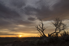 Looks like the sun is setting (Eduardo_il_Magnifico) Tags: sunset goldenhour sky clouds colour bush tree silhouette southaustralia kalabity bimbowrie weekeroo olary australia outdoors rural field nikond7000 sigma1770mm tripod