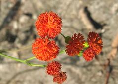 Ogrd Botaniczny Wrocaw (tomek034 (Thank you for the 1 200 000 visits)) Tags: polska poland wrocaw ogrdbotaniczny kwiaty kwiat kolor