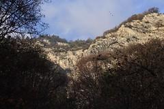 les trois oiseaux (bulbocode909) Tags: valais suisse saillon lasarvaz falaises arbres forts automne montagnes oiseaux nature nuages bleu
