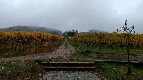 310 Herbst an der Bergstraße