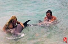 Phot.Curaao.Dolphin.Bini.02.1972.jpg (frankartculinary) Tags: nikon d800 d300 d200 f2 f3 f4 coolpix agfaisoletteiii frankartculinaryyahoode venezuela coloniatovar hotelselvanegra beach playa caracas corrida toros bullfight caracashilton curaao cactus halloween dolphin
