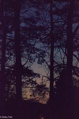 (B.jamison Photo) Tags: trees soft light blue pine fall cold night lowlight dark shadow old look canon t3i