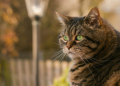 What's wrong here ? (FocusPocus Photography) Tags: cleo katze cat chat gato tier animal haustier pet herbst autumn fall