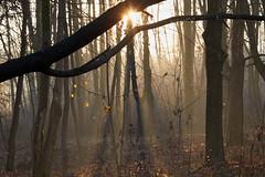 _MG_0534_C (grzegorz_63) Tags: autumn sunrise sun trees sunbeams light shadow canon70d