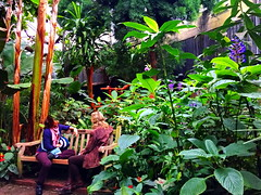 The tête-à-tête in the beautiful Bloedel Conservatory (peggyhr) Tags: peggyhr conversation vegetation green flowers red blue bench women conservatory img5685ab vancouver bc canada orange yellow black white hbm thegalaxy super~sixbronze☆stage1☆ niceasitgets~level1 thegalaxyhalloffame super~six☆stage2☆silver 25faves