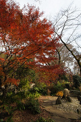 20161204-DS7_6520.jpg (d3_plus) Tags:  a05 wideangle d700 thesedays  architecturalstructure   kanagawapref   sky park autumnfoliage  japan   autumn superwideangle dailyphoto nikon tamronspaf1735mmf284dild  street daily  architectural  fall tamronspaf1735mmf284dildaspherical touring streetphoto  nikond700 tamronspaf1735mmf284 scenery building nature   tamron1735   tamronspaf1735mmf284dildasphericalif   autumnleaves