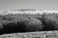 Sibillini incorniciati dal monte San Vicino (EmozionInUnClick - l'Avventuriero's photos) Tags: sibillini blackwhite bn faggeta montagna montesanvicino neve