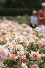 (LMerson) Tags: street flowers macro blackwhite bokeh longwoodgardens pennslyvania photographynikon bergencountycamera