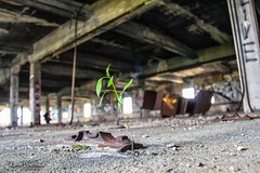 i don't care (Kamil Dziedzina Photos) Tags: history rust industrial urbanexploration industrialdecay naturewins industrialarchaeology 28dayslater naturetakingover humanvsnature industrialpast lifeafterpeople abandonedamerica